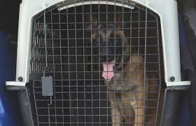 belgian shepherd kennels crating controversy is your crate helping or hurting the