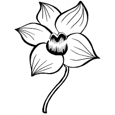 orchid cymbidium flower coloring sheets printable for girls