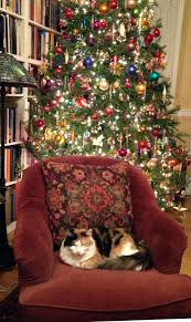 35 best cats and christmas trees images on pinterest christmas