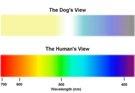 Color Blind What Do They See Plexidor Pet Doors Dogs Are Not Color Blind They Just See The