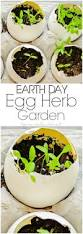 earth month project how to make an eggshell herb garden home