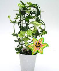 buy house plants now ceropegia lantern flower u0027african parachute