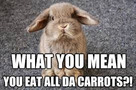 Bunny Meme - 48 very funny bunnies meme pictures of all the time