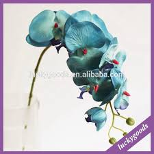 blue orchids for sale cattleya orchids for sale wholesale orchids for sale suppliers