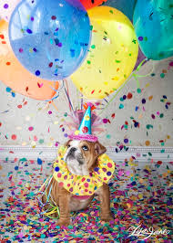best 25 happy birthday puppy ideas on pinterest happy birthday