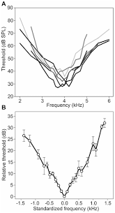 Cherry Cocktail Party Effect - solutions to the cocktail party problem in insects selective