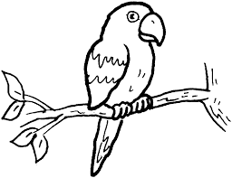 parrot clipart simple pencil and in color parrot clipart simple