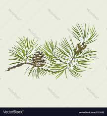christmas tree with snow branch of christmas tree with snow pine branch vector image