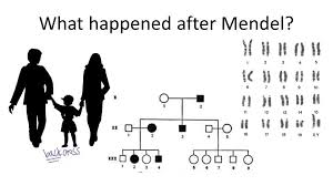 mendelian inheritance in humans ck 12 foundation