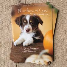 8 thinking of you at thanksgiving note cards dayspring