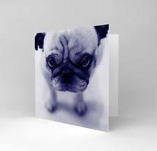 pug birthday cards ebay