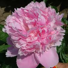 Most Fragrant Plants - mckay u0027s blog 4 fragrant plants that will make your senses skyrocket