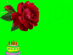 lovely birthday rose free birthday wishes ecards greeting cards