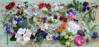 flowers today 43 flowers for today lynda hallinan