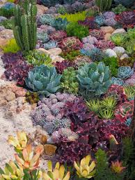 Succulent Gardens Ideas Pretty Design Ideas Succulent Garden Best 25 Outdoor Cactus On
