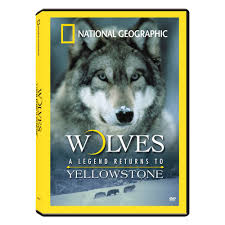 wolves a legend returns to yellowstone dvd national geographic