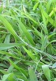 6 natural weed control solutions for your lawn u0026 vegetable garden