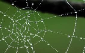 scientists have created a spider web like u201cliquid wire u201d