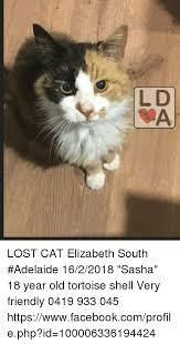 Lost Cat Meme - lost cat elizabeth south adelaide 1622018 sasha 18 year old