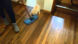 Dust Mop For Laminate Floors Pomeranian Dust Mop Youtube