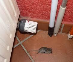 souris cuisine minnie souris dans ma cuisine