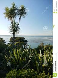 native plants new zealand new zealand garden native plants sea view stock photo image