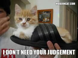 Cats Meme - more modern cat memes modern cat