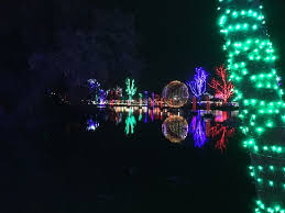 trees and lights picture of zoo tripadvisor