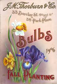 fall is time for planting bulbs