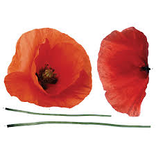 poppy home decor wall decal beautiful poppy wall decals poppy stickers remembrance