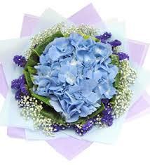 hydrangea bouquet bouquet solely hydrangea online florist malaysia