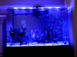 marineland aquatic plant led lighting system w timer 48 60 six beauties from april shipment