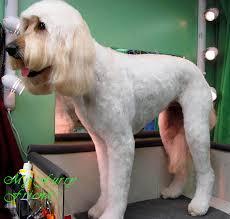 Dog Grooming Styles Haircuts Pet Grooming The Good The Bad U0026 The Furry Grooming