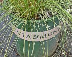 ornament landscaping with monkey grass stunning ornamental grasses