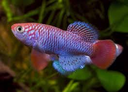 how do i tell the of my fish all aquarium info where to