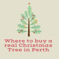 where to buy real trees in perth this perth