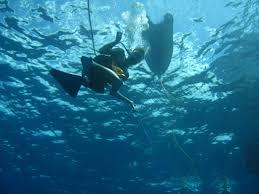 South Dakota snorkeling images Navarre beach marine science station snorkeling diving jpg