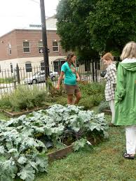 fairhill native plants gardening with kids