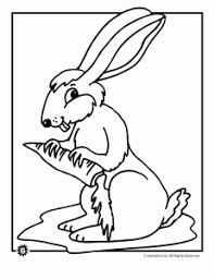 bunny coloring pages animal jr