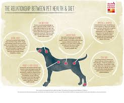 benefits of dehydrated food for pets the honest kitchen