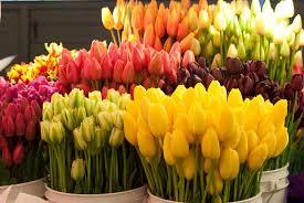 fresh cut flowers tips to keep fresh cut flowers longer decent homedecent home
