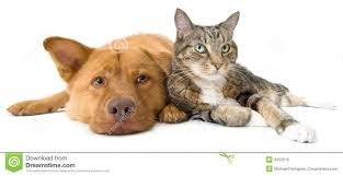 dog and cat together wide angle stock photo image 9452010