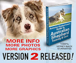 australian shepherd lovers australian shepherd lovers newsletter whew it took a lot of