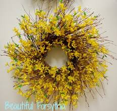 forsythia wreath hang a forsythia wreath on your door for kate coury s