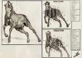 Human Anatomy Worksheet Human Anatomy Horse Anatomy Horse Leg Anatomy Horse Anatomy