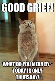 Internet Meme Cat - good grief cat meme cat planet cat planet