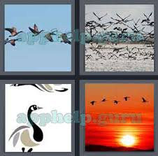 4 pics 1 word all level 1601 to 1700 5 letters answers xspl