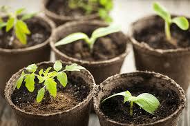 Gardening Zones Canada - grow your own food knowing your canadian gardening zone food