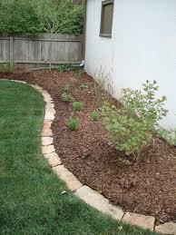 magnificent backyard plant ideas 5 plants for shade rock garden