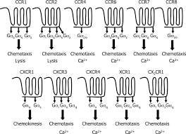 insights into seven and single transmembrane spanning domain